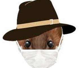 Ferret Coronavirus
