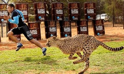 Bryan Habana vs cheetah