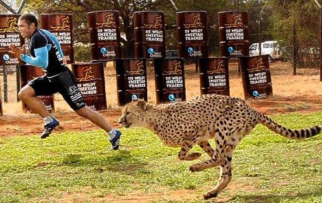 Bryan Habana vs cheetah
